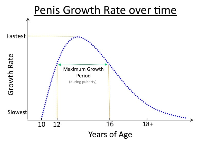 penis growth rate chart