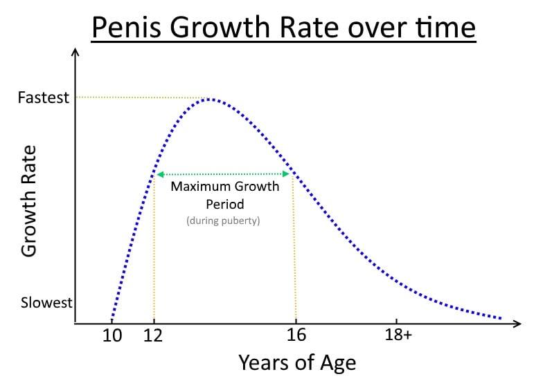 penis-start-to-grow
