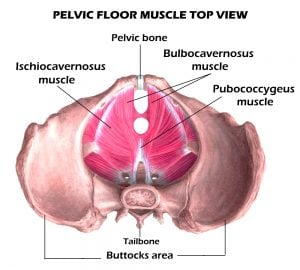 three main muscles for men's kegel routines
