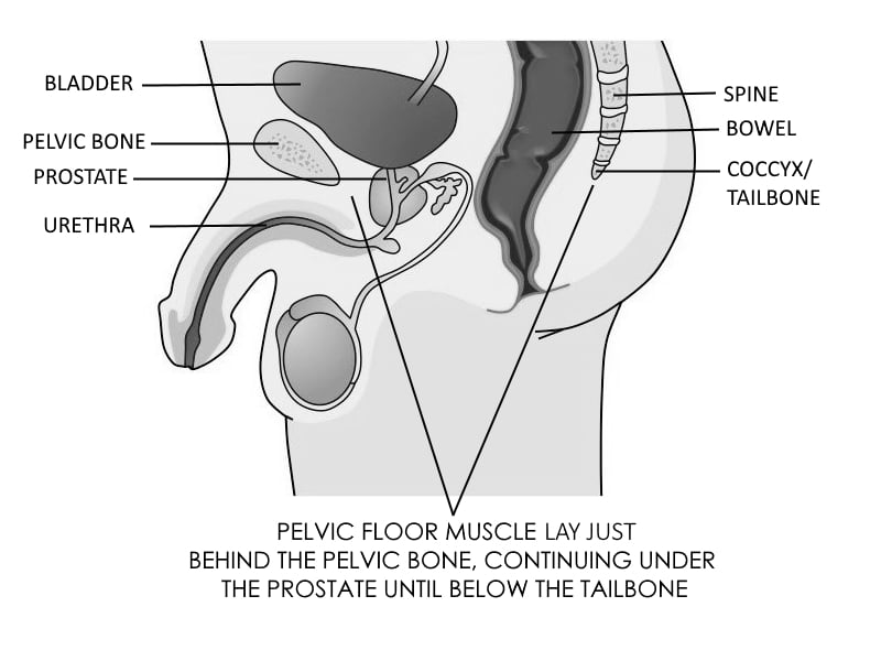 PELVIC FLOOR MUSCLES LOCATION