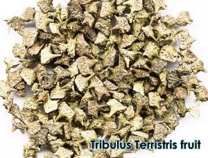 tribulus terristris fruit